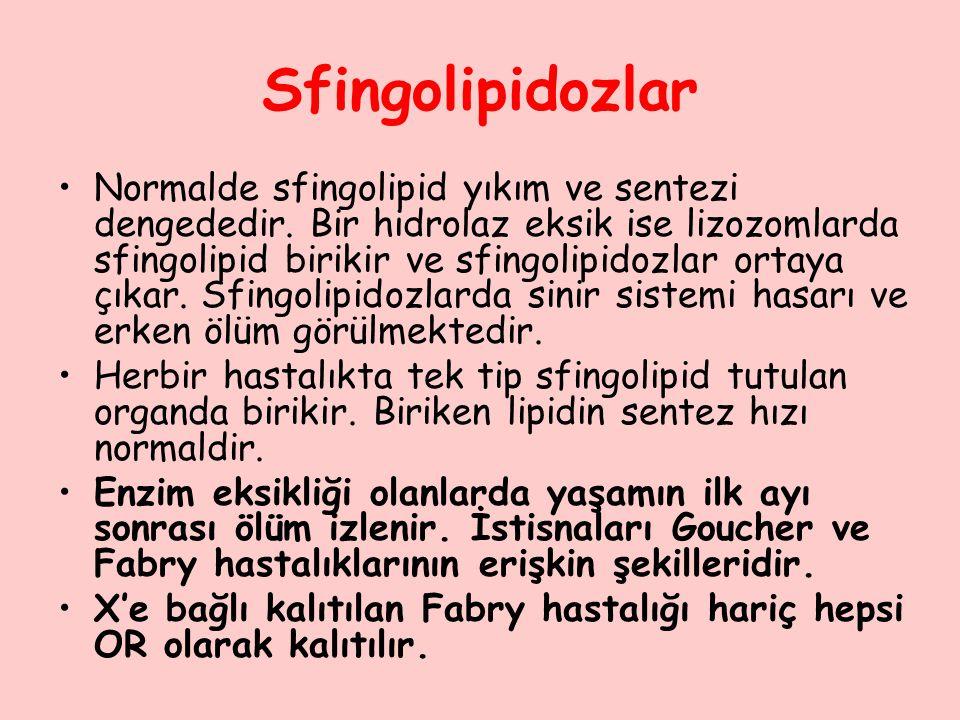 Sfingolipidozlar Normalde sfingolipid yıkım ve sentezi dengededir. Bir hidrolaz eksik ise lizozomlarda sfingolipid birikir ve sfingolipidozlar ortaya