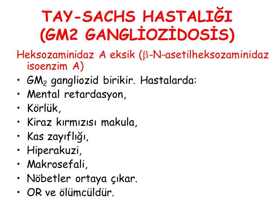 TAY-SACHS HASTALIĞI (GM2 GANGLİOZİDOSİS) Heksozaminidaz A eksik (  -N-asetilheksozaminidaz isoenzim A) GM 2 gangliozid birikir. Hastalarda: Mental re