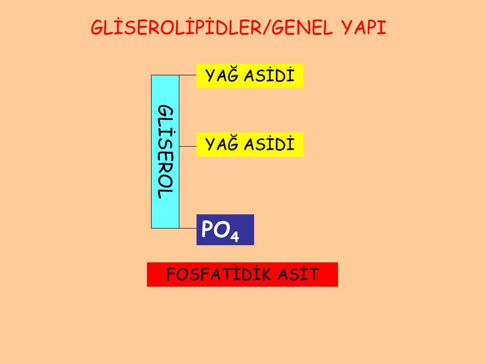 GLİSEROL YAĞ ASİDİ FOSFATİDİK ASİT GLİSEROLİPİDLER/GENEL YAPI PO 4
