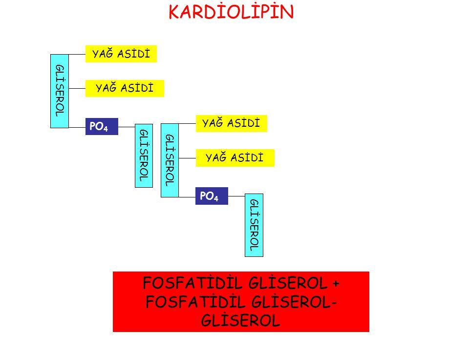 GLİSEROLGLİSEROL alkolPO 4 FFA Fosfolipaz A 1 Fosfolipaz A 2 Fosfolipaz CFosfolipaz D FOSFOLİPİD YIKIMI FFA