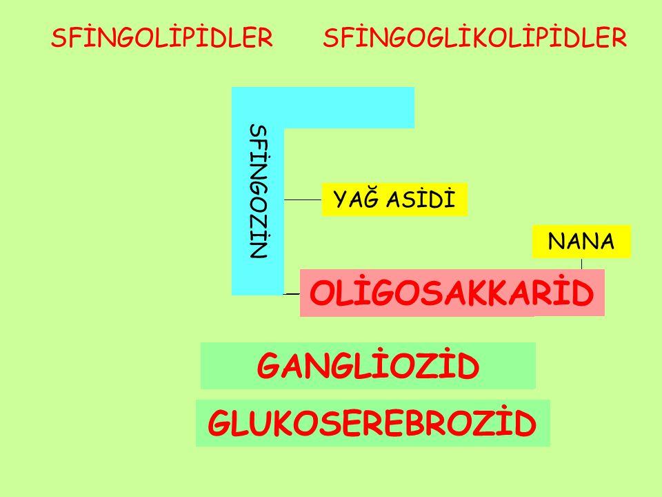 Glikolipid metabolizması Vücutta tüm membranların esas bileşenidir, en fazla sinir dokuda yer alır.