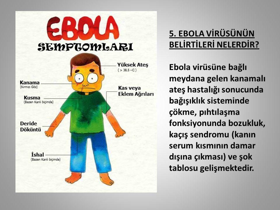 5. EBOLA VİRÜSÜNÜN BELİRTİLERİ NELERDİR? Ebola virüsüne bağlı meydana gelen kanamalı ateş hastalığı sonucunda bağışıklık sisteminde çökme, pıhtılaşma