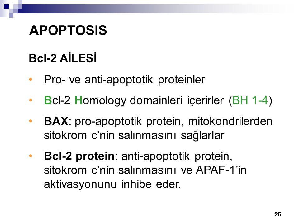 26 Bax/Bcl-2 APOPTOSIS Mitokondrial Dış Membrane Cyt.