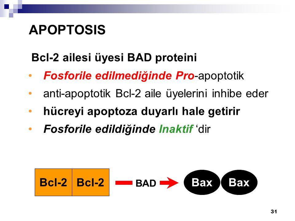 31 Bcl-2 ailesi üyesi BAD proteini Fosforile edilmediğinde Pro-apoptotik anti-apoptotik Bcl-2 aile üyelerini inhibe eder hücreyi apoptoza duyarlı hale