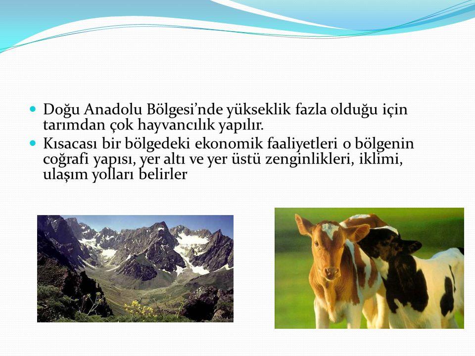 Doğu Anadolu Bölgesi'nde yükseklik fazla olduğu için tarımdan çok hayvancılık yapılır. Kısacası bir bölgedeki ekonomik faaliyetleri o bölgenin coğrafi