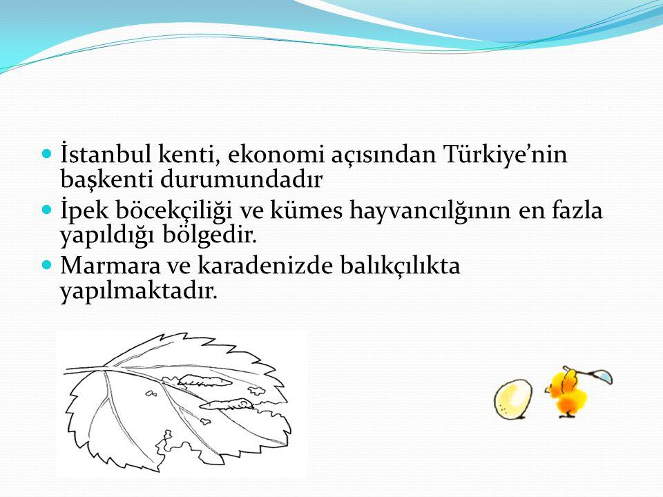 İstanbul kenti, ekonomi açısından Türkiye'nin başkenti durumundadır İpek böcekçiliği ve kümes hayvancılğının en fazla yapıldığı bölgedir. Marmara ve k