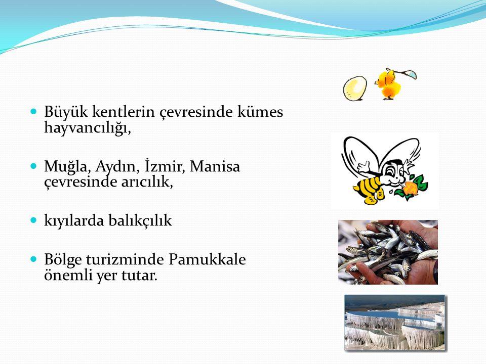 Büyük kentlerin çevresinde kümes hayvancılığı, Muğla, Aydın, İzmir, Manisa çevresinde arıcılık, kıyılarda balıkçılık Bölge turizminde Pamukkale önemli