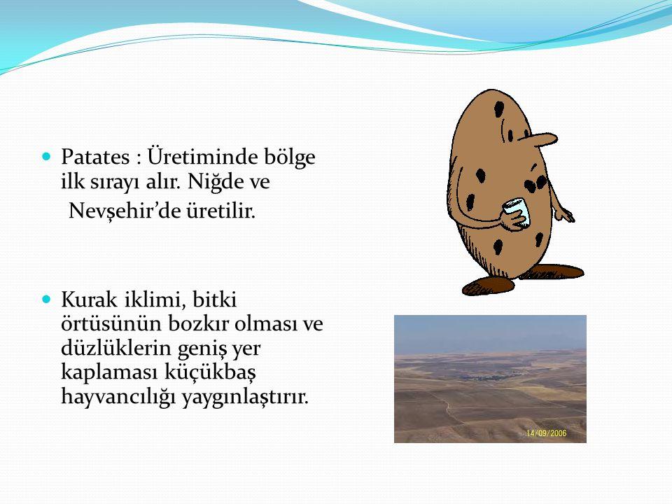 Patates : Üretiminde bölge ilk sırayı alır. Niğde ve Nevşehir'de üretilir. Kurak iklimi, bitki örtüsünün bozkır olması ve düzlüklerin geniş yer kaplam