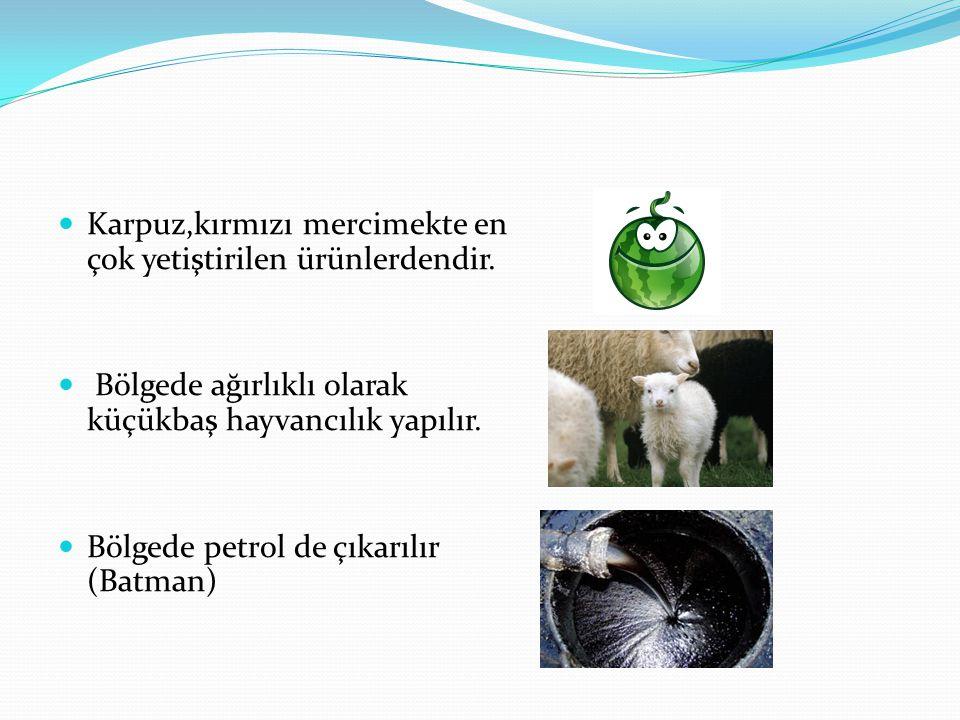 Karpuz,kırmızı mercimekte en çok yetiştirilen ürünlerdendir. Bölgede ağırlıklı olarak küçükbaş hayvancılık yapılır. Bölgede petrol de çıkarılır (Batma