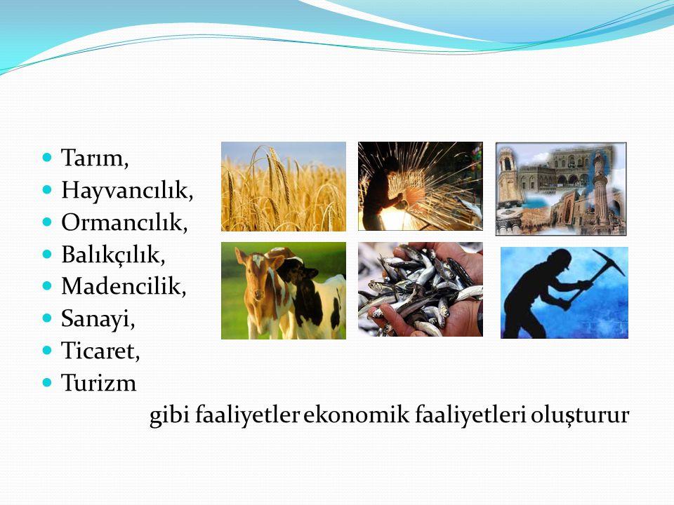 Tarım, Hayvancılık, Ormancılık, Balıkçılık, Madencilik, Sanayi, Ticaret, Turizm gibi faaliyetler ekonomik faaliyetleri oluşturur