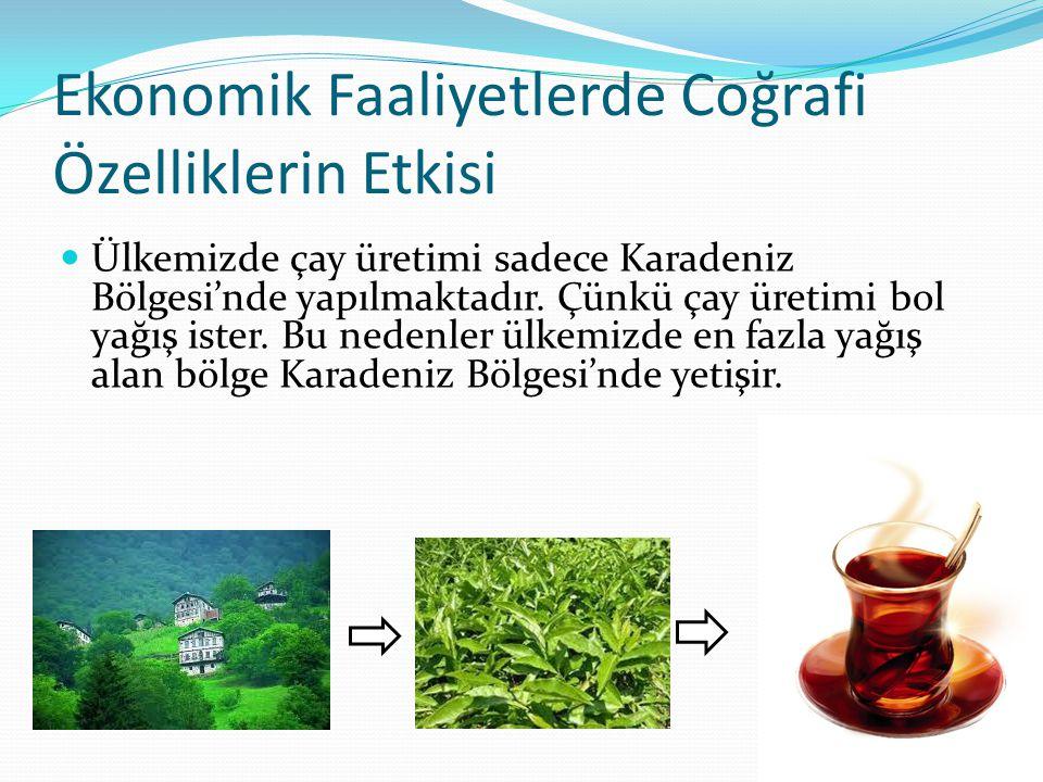 Ekonomik Faaliyetlerde Coğrafi Özelliklerin Etkisi Ülkemizde çay üretimi sadece Karadeniz Bölgesi'nde yapılmaktadır. Çünkü çay üretimi bol yağış ister