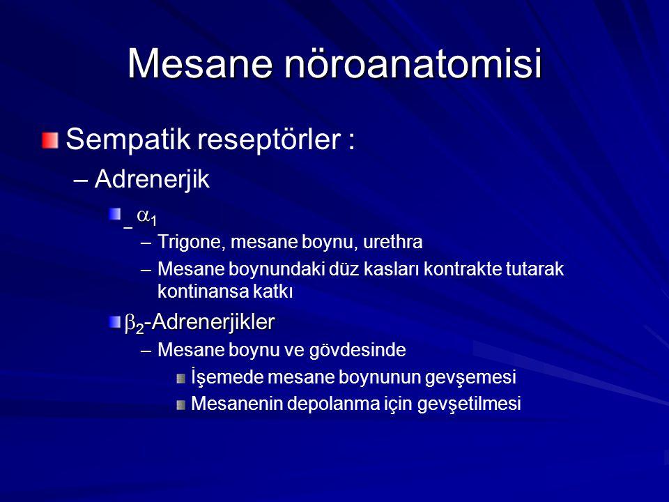 Mesane nöroanatomisi Sempatik reseptörler : – –Adrenerjik  1 _  1 – –Trigone, mesane boynu, urethra – –Mesane boynundaki düz kasları kontrakte tutarak kontinansa katkı  2 -Adrenerjikler – –Mesane boynu ve gövdesinde İşemede mesane boynunun gevşemesi Mesanenin depolanma için gevşetilmesi