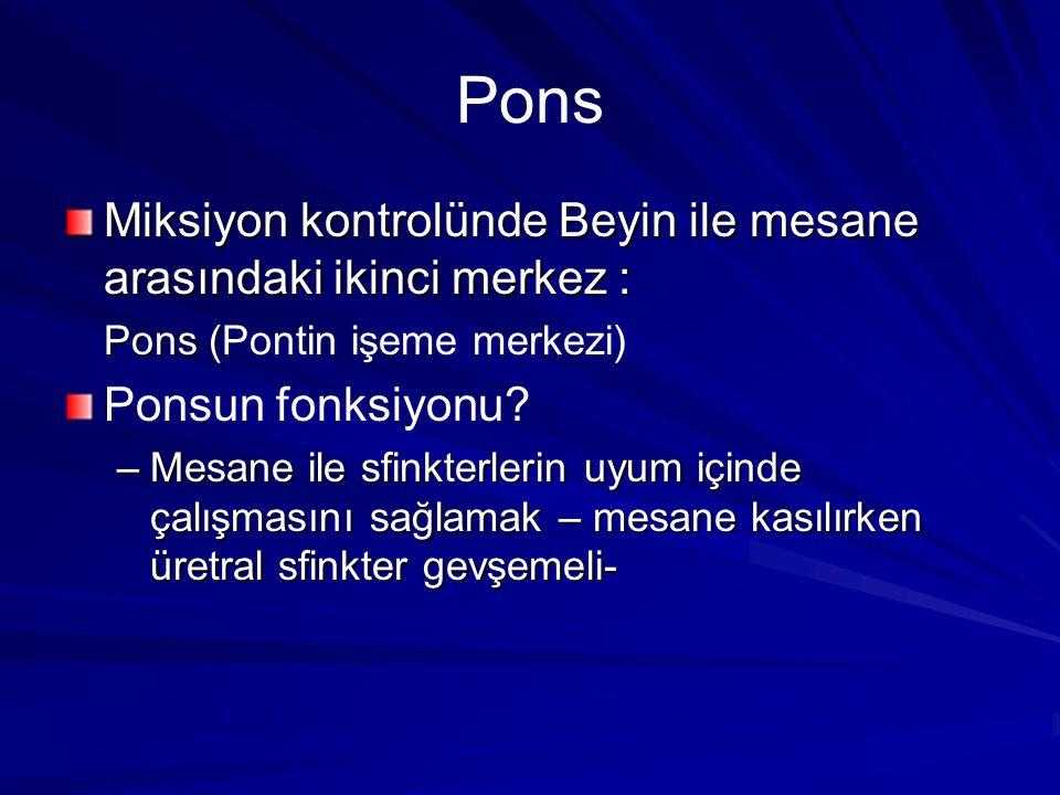 Pons Miksiyon kontrolünde Beyin ile mesane arasındaki ikinci merkez : Pons ( Pons (Pontin işeme merkezi) Ponsun fonksiyonu.