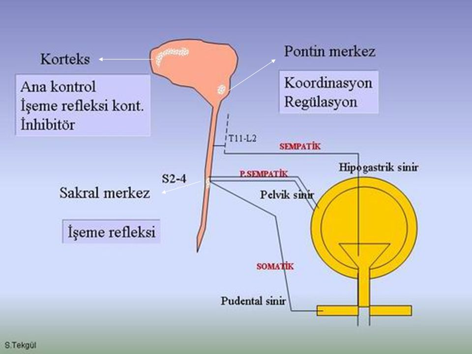 Pathophysiology SCI (after resolution of spinal shock) – –Urge incontinence – –External sphincter may have paradoxical contractions Detrusor-sphincter dyssynergia