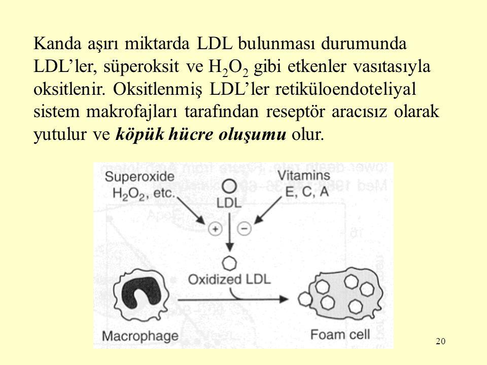 20 Kanda aşırı miktarda LDL bulunması durumunda LDL'ler, süperoksit ve H 2 O 2 gibi etkenler vasıtasıyla oksitlenir.
