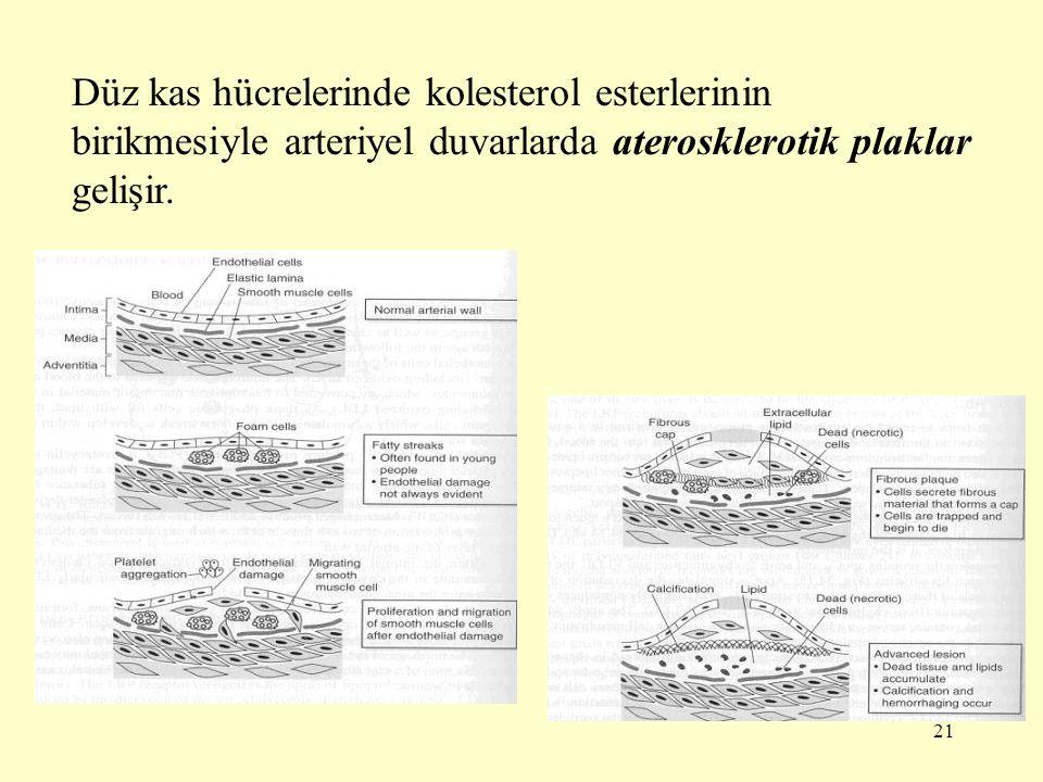 21 Düz kas hücrelerinde kolesterol esterlerinin birikmesiyle arteriyel duvarlarda aterosklerotik plaklar gelişir.