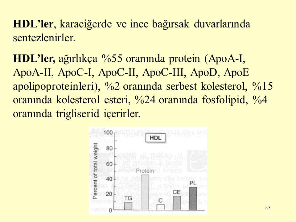 23 HDL'ler, karaciğerde ve ince bağırsak duvarlarında sentezlenirler.
