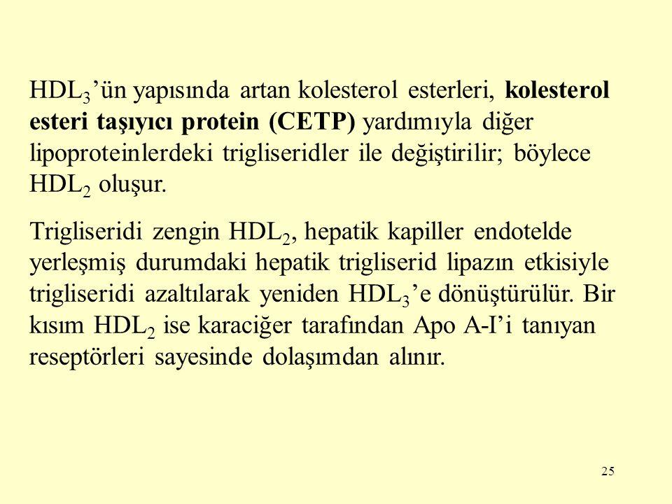 25 HDL 3 'ün yapısında artan kolesterol esterleri, kolesterol esteri taşıyıcı protein (CETP) yardımıyla diğer lipoproteinlerdeki trigliseridler ile değiştirilir; böylece HDL 2 oluşur.