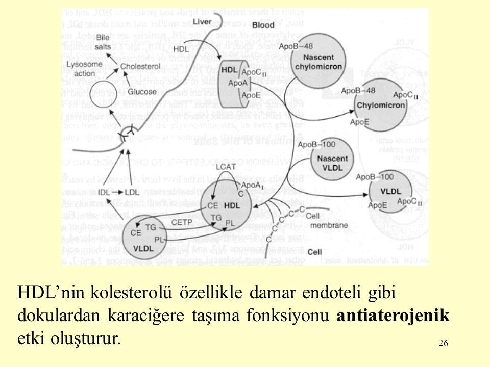 26 HDL'nin kolesterolü özellikle damar endoteli gibi dokulardan karaciğere taşıma fonksiyonu antiaterojenik etki oluşturur.