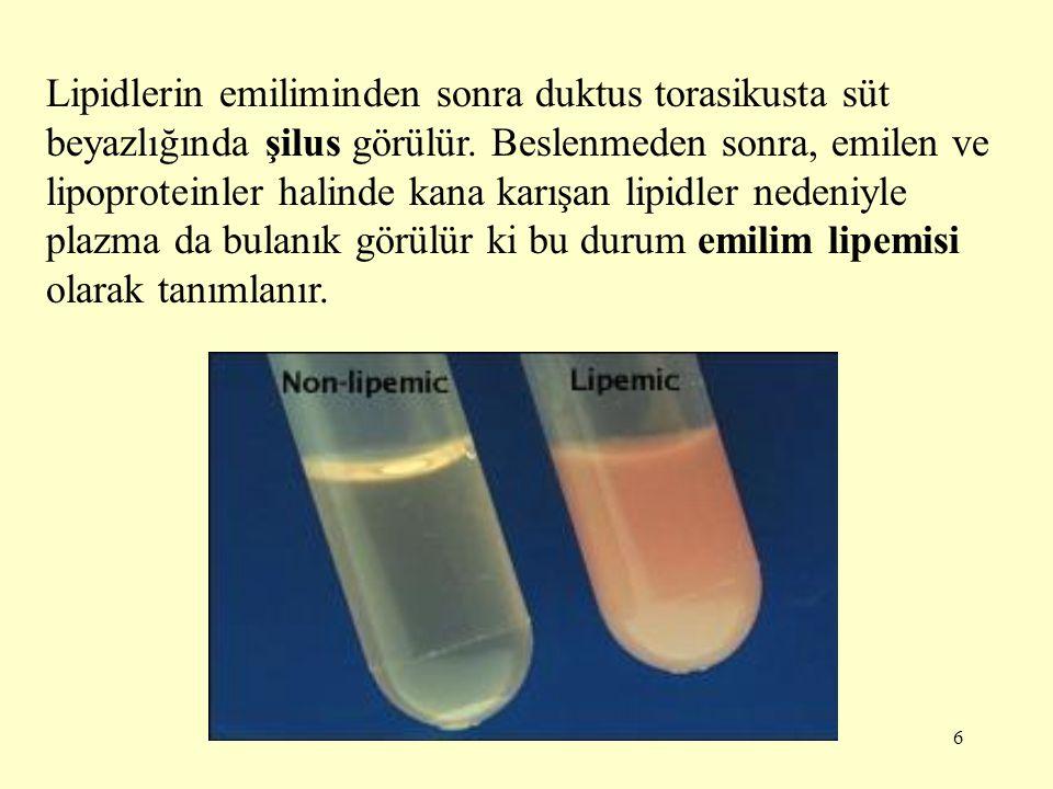 6 Lipidlerin emiliminden sonra duktus torasikusta süt beyazlığında şilus görülür.