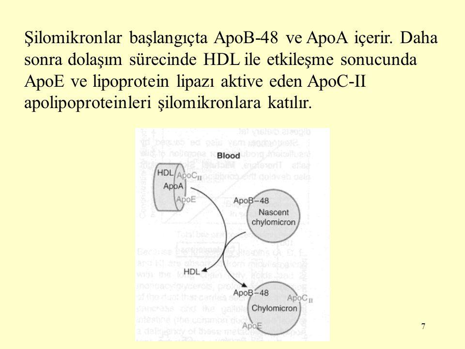 8 Şilomikronlar, aktive olan lipoprotein lipaz (LPL) etkisiyle trigliserid içeriğinin çoğunu kaybederler ve daha küçük çaplı şilomikron kalıntılarına dönüşürler.