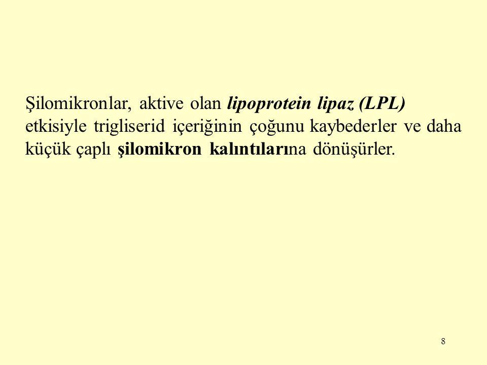 9 Karaciğer hücrelerindeki ApoE reseptörleri şilomikron kalıntılarını tanır.