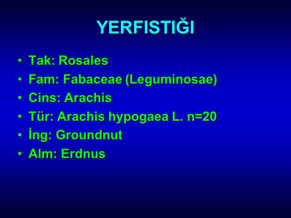YERFISTIĞI Tak: RosalesTak: Rosales Fam: Fabaceae (Leguminosae)Fam: Fabaceae (Leguminosae) Cins: ArachisCins: Arachis Tür: Arachis hypogaea L. n=20Tür