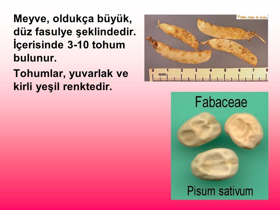 Meyve, oldukça büyük, düz fasulye şeklindedir. İçerisinde 3-10 tohum bulunur. Tohumlar, yuvarlak ve kirli yeşil renktedir.