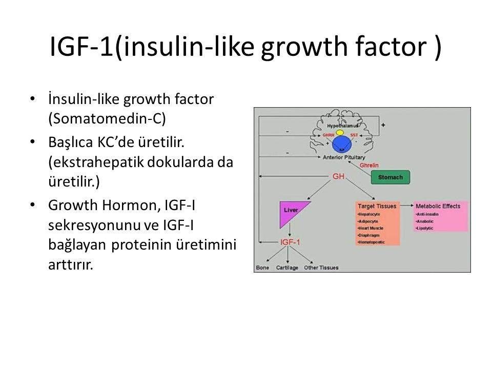 IGF-1(insulin-like growth factor ) İnsulin-like growth factor (Somatomedin-C) Başlıca KC'de üretilir. (ekstrahepatik dokularda da üretilir.) Growth Ho