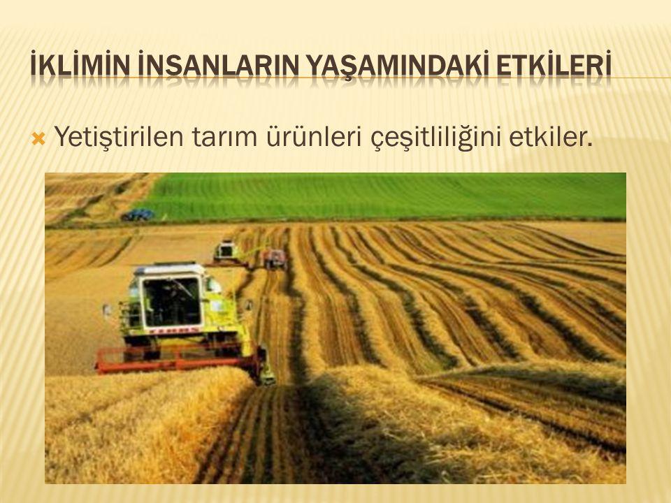  Yetiştirilen tarım ürünleri çeşitliliğini etkiler.