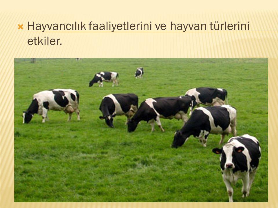  Hayvancılık faaliyetlerini ve hayvan türlerini etkiler.