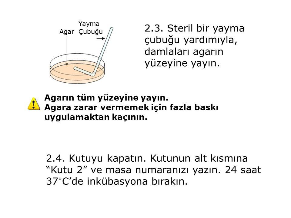 2.3. Steril bir yayma çubuğu yardımıyla, damlaları agarın yüzeyine yayın.