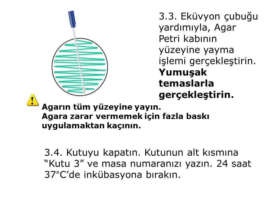 3.3. Eküvyon çubuğu yardımıyla, Agar Petri kabının yüzeyine yayma işlemi gerçekleştirin.