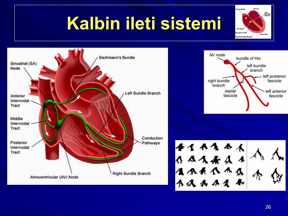 26 Kalbin ileti sistemi