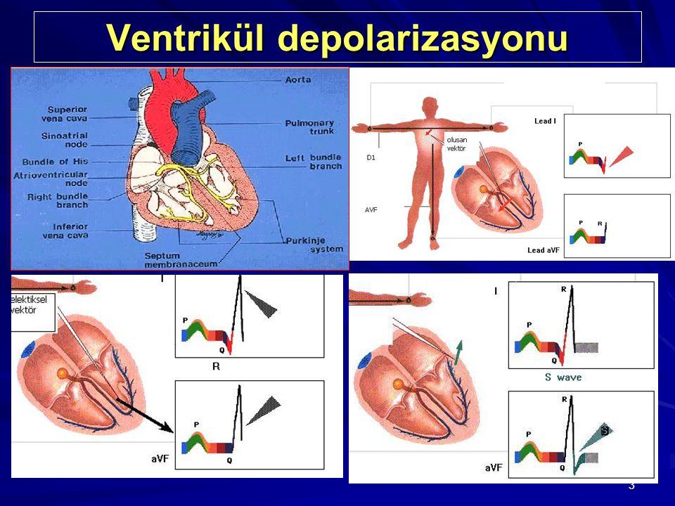 3 Ventrikül depolarizasyonu