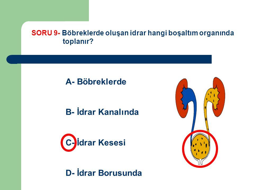 SORU 9- Böbreklerde oluşan idrar hangi boşaltım organında toplanır? A- Böbreklerde B- İdrar Kanalında C- İdrar Kesesi D- İdrar Borusunda