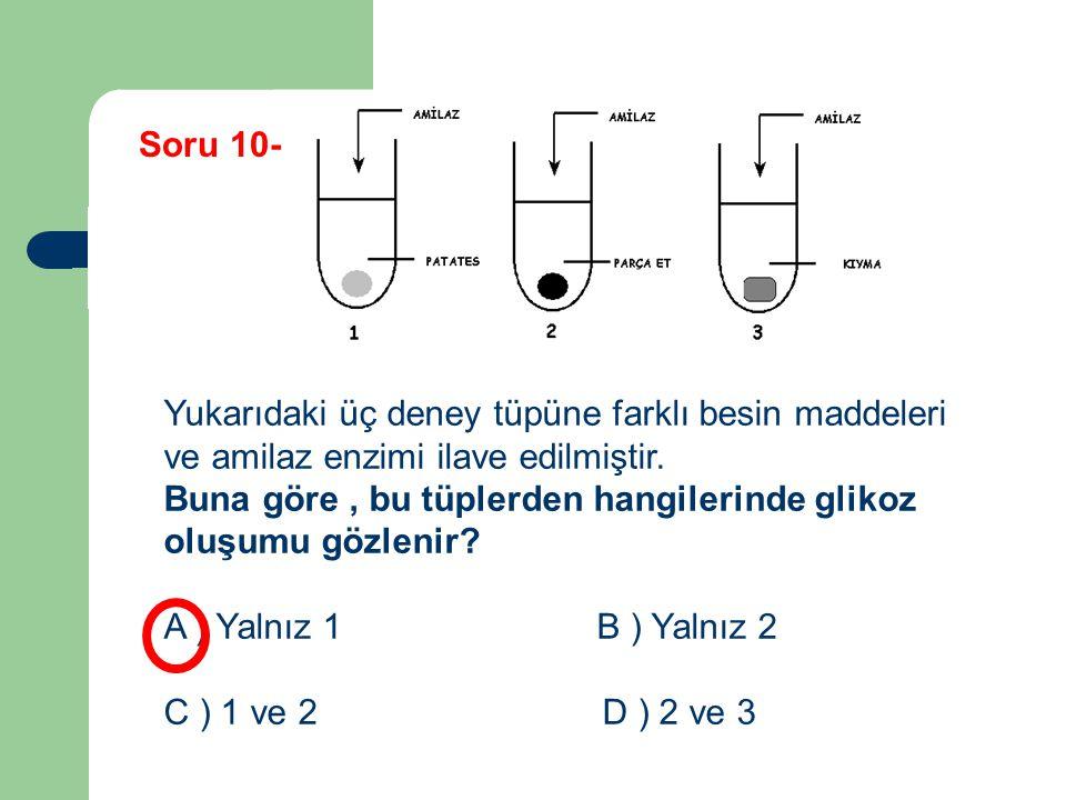 Yukarıdaki üç deney tüpüne farklı besin maddeleri ve amilaz enzimi ilave edilmiştir. Buna göre, bu tüplerden hangilerinde glikoz oluşumu gözlenir? A )