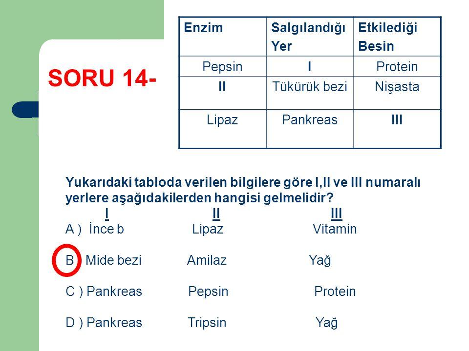 SORU 14- EnzimSalgılandığı Yer Etkilediği Besin PepsinIProtein IITükürük beziNişasta LipazPankreasIII Yukarıdaki tabloda verilen bilgilere göre I,II v