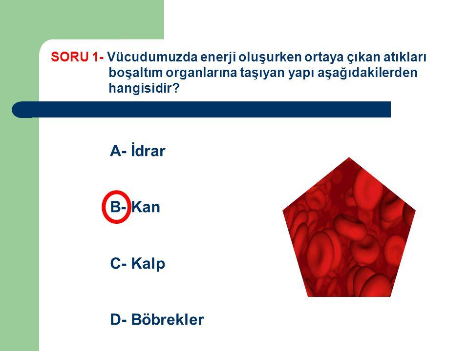 SORU 1- Vücudumuzda enerji oluşurken ortaya çıkan atıkları boşaltım organlarına taşıyan yapı aşağıdakilerden hangisidir? A- İdrar B- Kan C- Kalp D- Bö