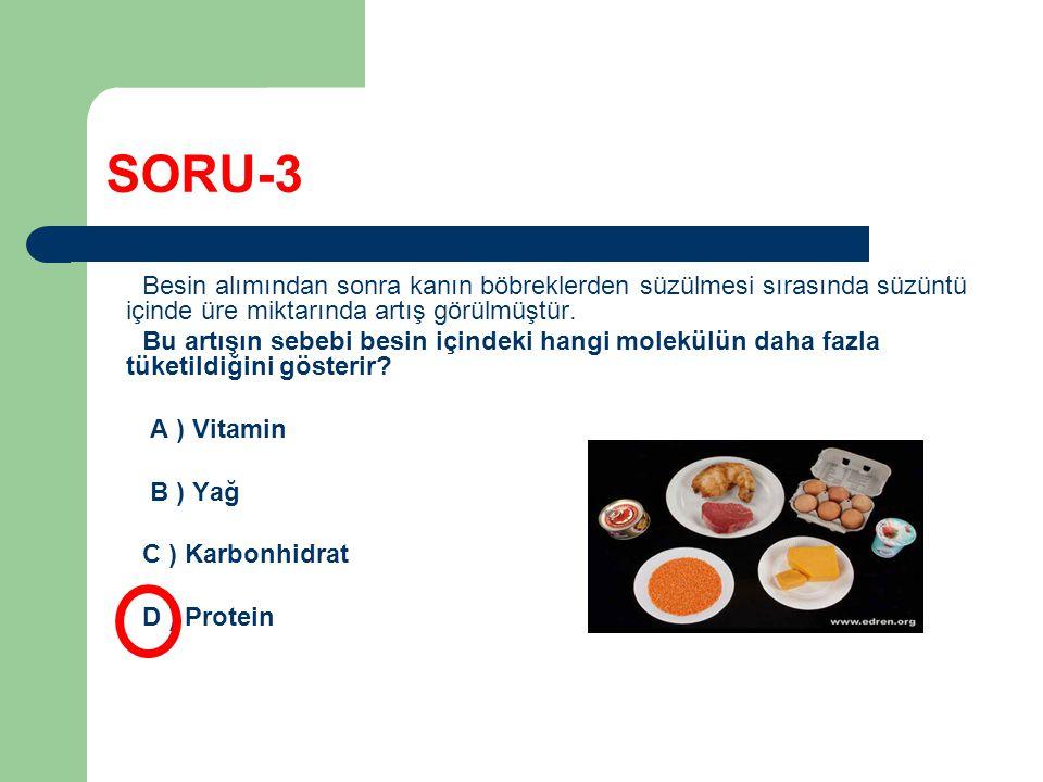 SORU-3 Besin alımından sonra kanın böbreklerden süzülmesi sırasında süzüntü içinde üre miktarında artış görülmüştür. Bu artışın sebebi besin içindeki