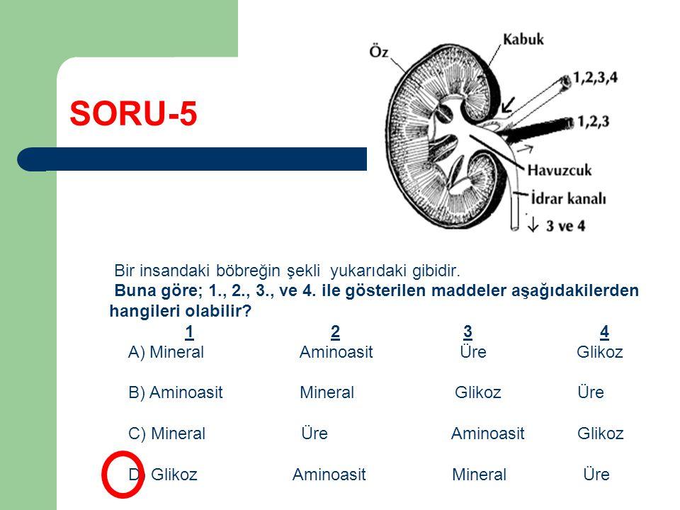 SORU-5 Bir insandaki böbreğin şekli yukarıdaki gibidir. Buna göre; 1., 2., 3., ve 4. ile gösterilen maddeler aşağıdakilerden hangileri olabilir? 1 2 3