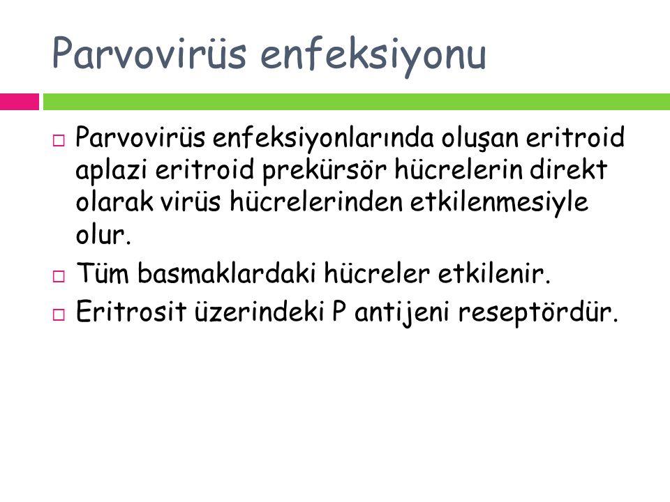 Parvovirüs enfeksiyonu  Parvovirüs enfeksiyonlarında oluşan eritroid aplazi eritroid prekürsör hücrelerin direkt olarak virüs hücrelerinden etkilenme