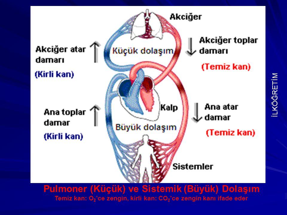 Pulmoner (Küçük) ve Sistemik (Büyük) Dolaşım Temiz kan: O 2 'ce zengin, kirli kan: CO 2 'ce zengin kanı ifade eder İLKÖĞRETİM