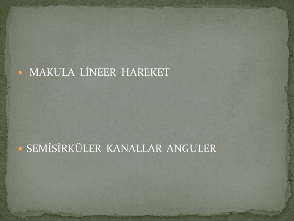 MAKULA LİNEER HAREKET SEMİSİRKÜLER KANALLAR ANGULER