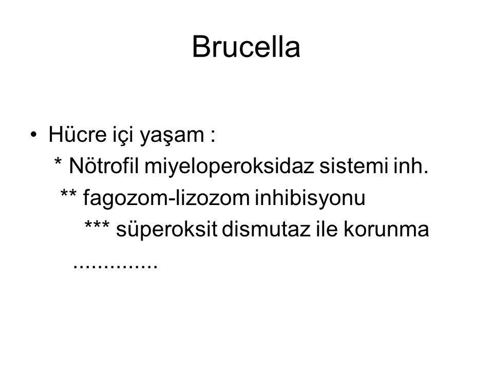 Brucella Hücre içi yaşam : * Nötrofil miyeloperoksidaz sistemi inh. ** fagozom-lizozom inhibisyonu *** süperoksit dismutaz ile korunma..............