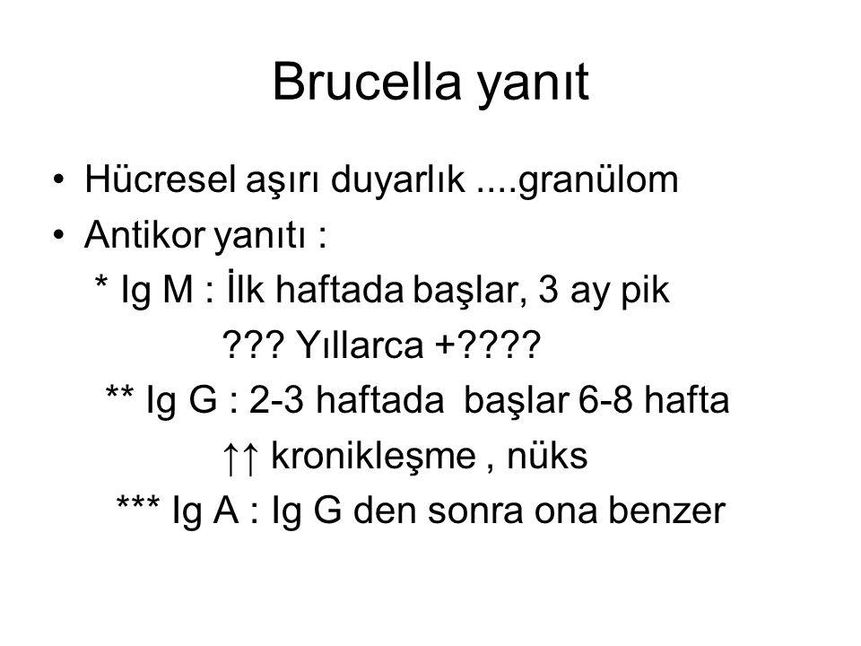 Brucella yanıt Hücresel aşırı duyarlık....granülom Antikor yanıtı : * Ig M : İlk haftada başlar, 3 ay pik ??? Yıllarca +???? ** Ig G : 2-3 haftada baş