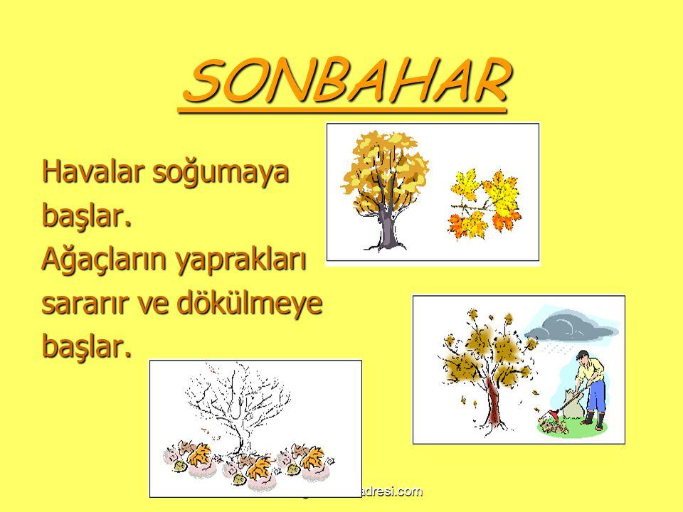 www.egitimcininadresi.com SONBAHAR Havalar soğumaya başlar. Ağaçların yaprakları sararır ve dökülmeye başlar.