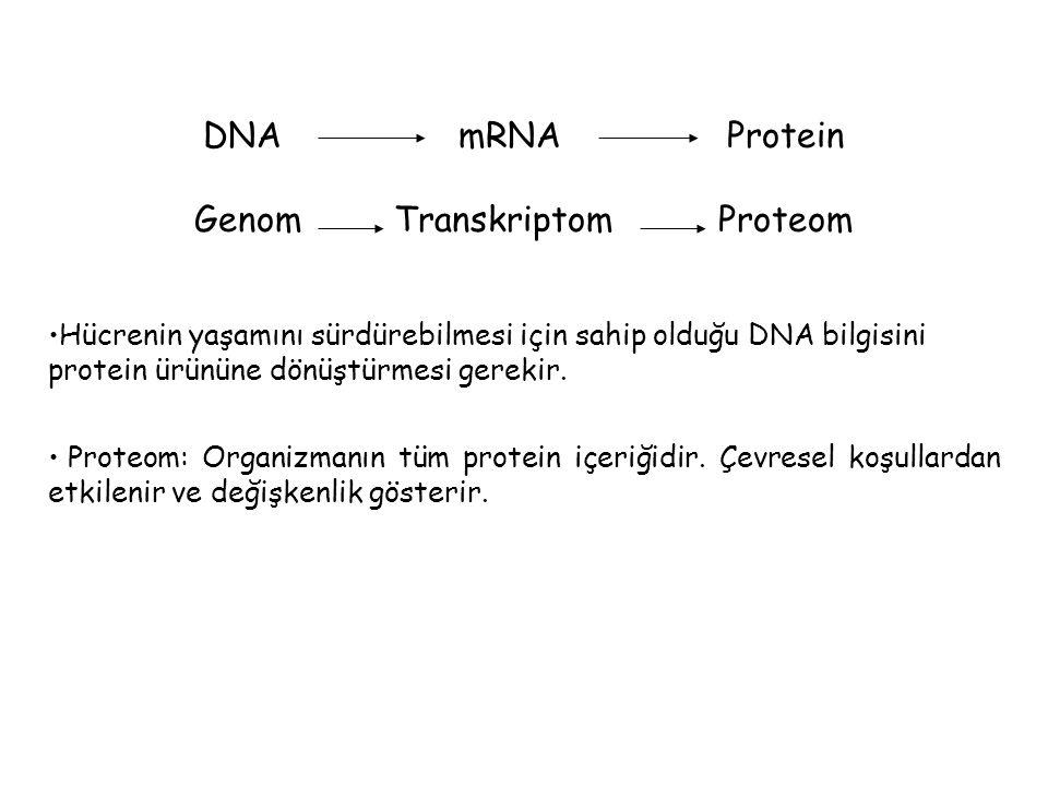 DNA mRNA Protein Genom Transkriptom Proteom Hücrenin yaşamını sürdürebilmesi için sahip olduğu DNA bilgisini protein ürününe dönüştürmesi gerekir.