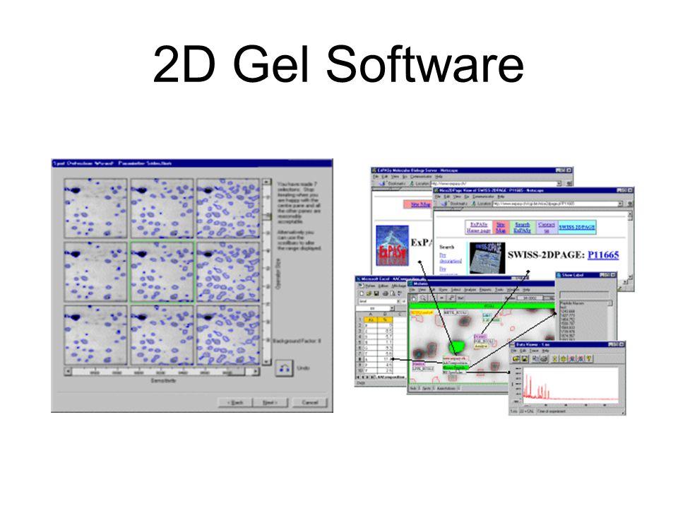 2D Gel Software