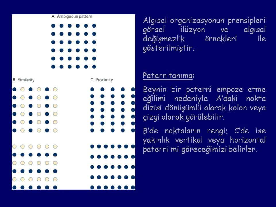 Algısal organizasyonun prensipleri görsel ilüzyon ve algısal değişmezlik örnekleri ile gösterilmiştir. Patern tanıma: Beynin bir paterni empoze etme e